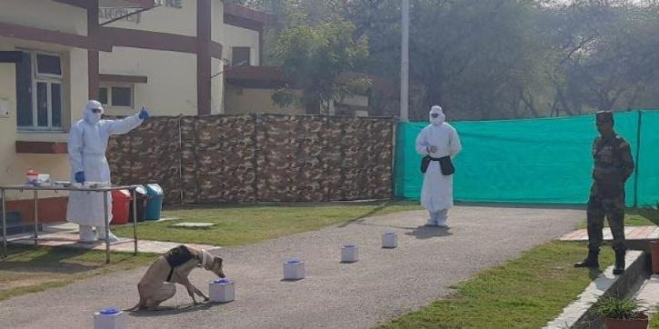 dog india army training