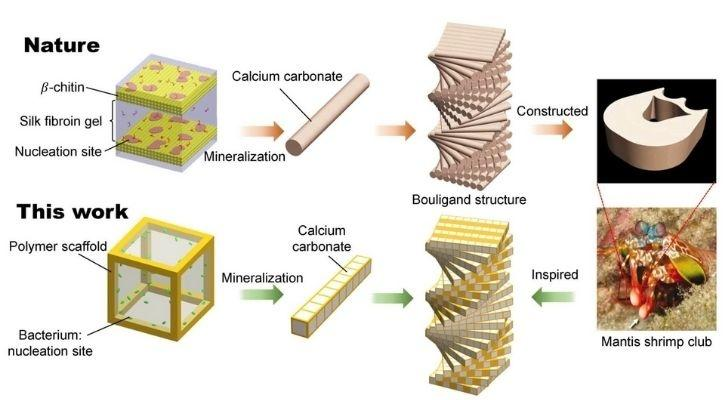 bacteria engineering