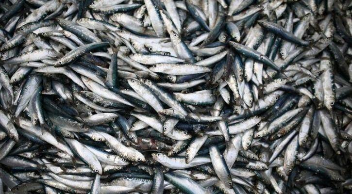 fish population global warming