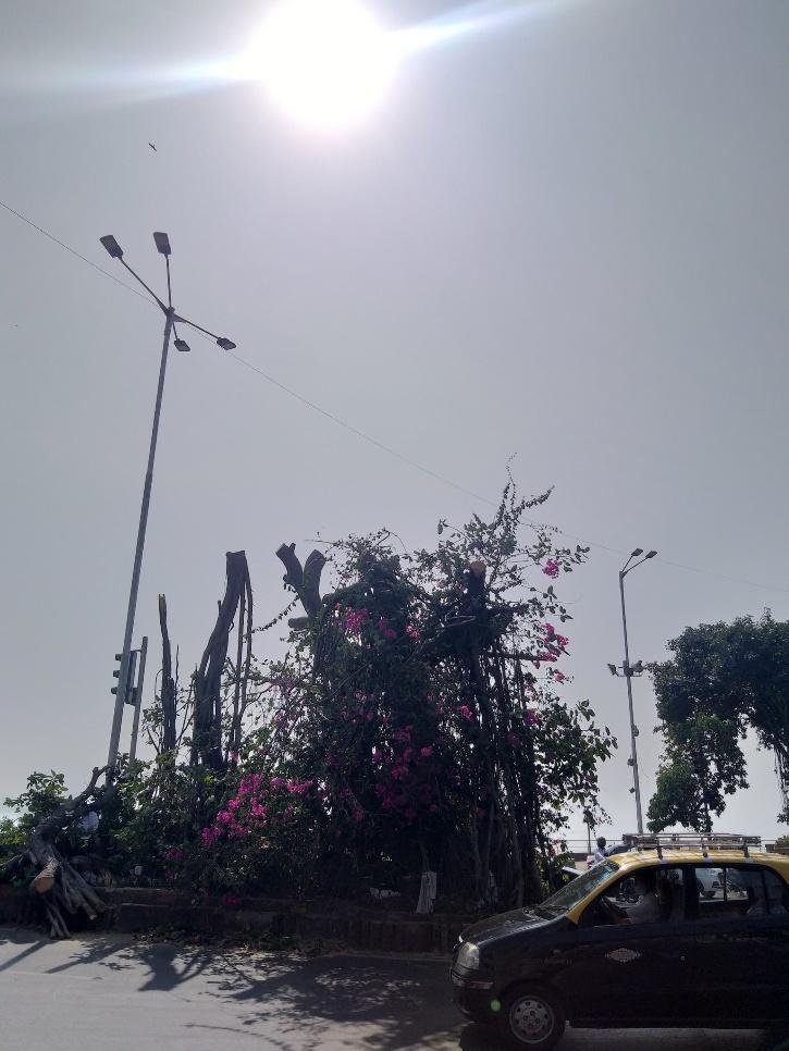 The Banyan Tree at Tambe Chowk near Mumbai
