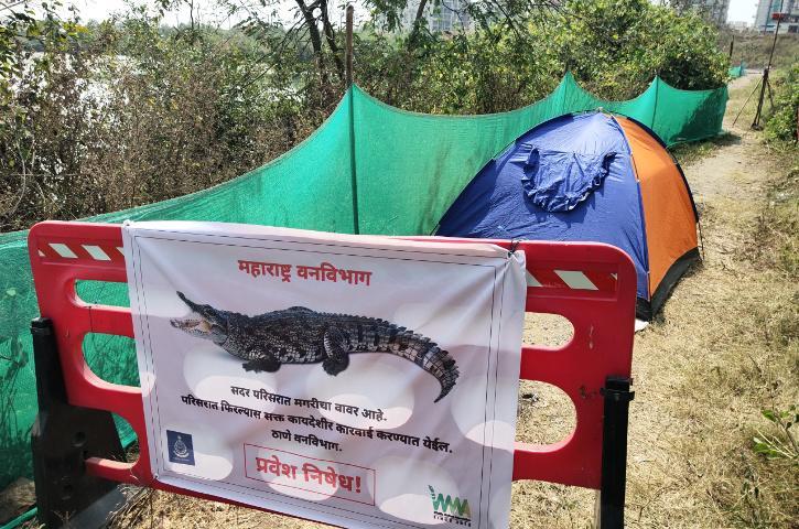 navi mumbai crocodile