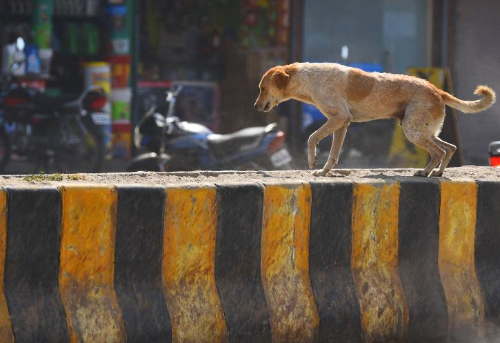 Prevention of Cruelty to Animals Act