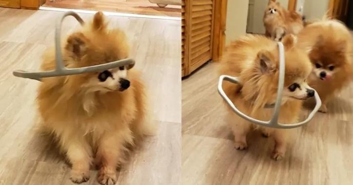 3d printed dog loop