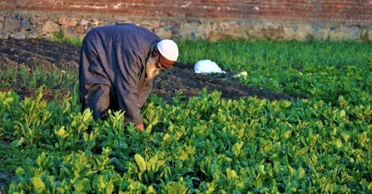 spinach emails plant nanobionics