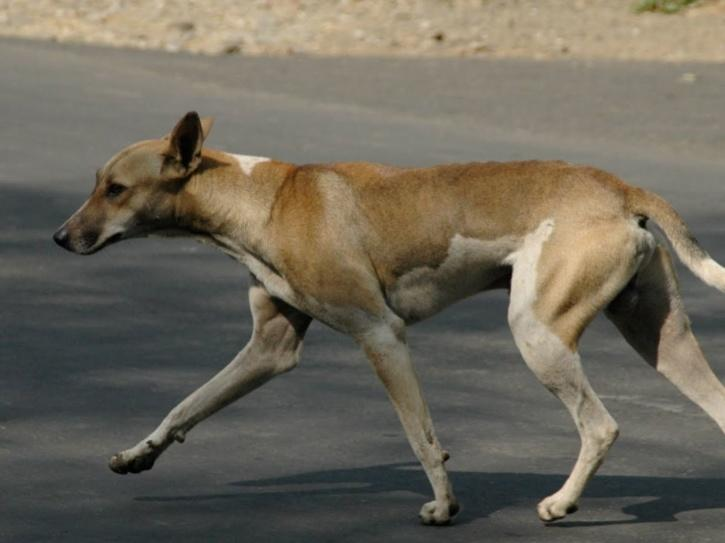 stray dog which had apparently killed a young leopard in a fight
