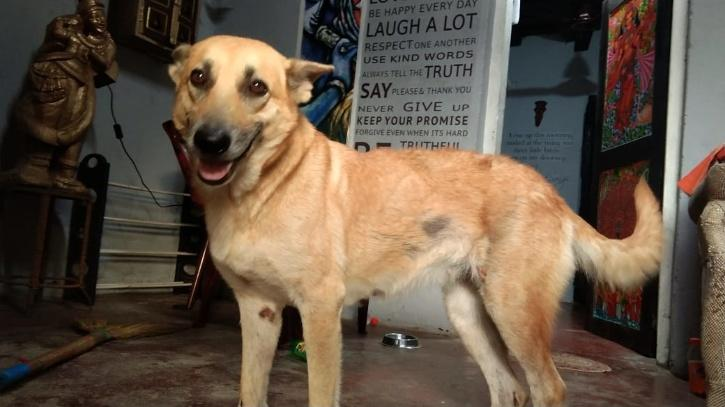 Kerala Dog Car
