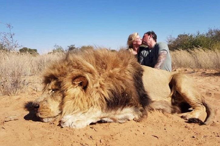 dead lion