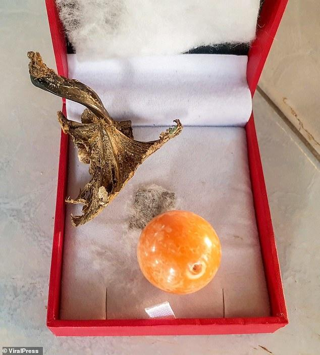 Hatchai found a discarded buoy ball washed ashore with three beautiful shells