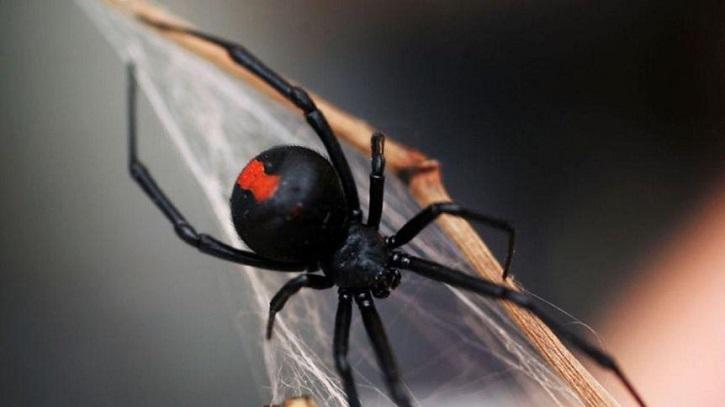 spider web research mit