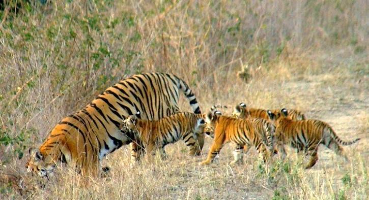 Umred Paoni Karhandla Wildlife Sanctuary