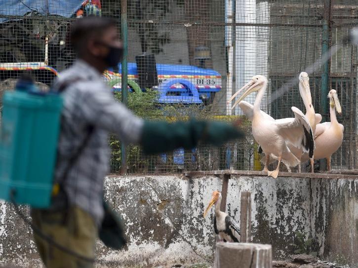 Bird Flu, Bird Flu Outbreak Kerala, Bird Flu Outbreak Himachal, Bird Flu Outbreak Rajasthan, Bird Flu Symptoms, Bird Flu Mortality Rate