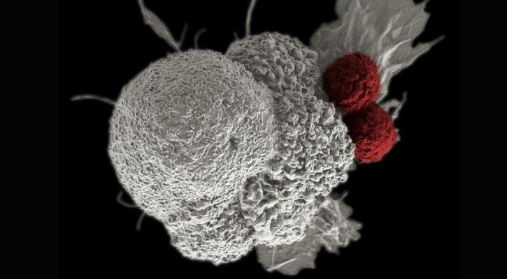 aneuploid cells