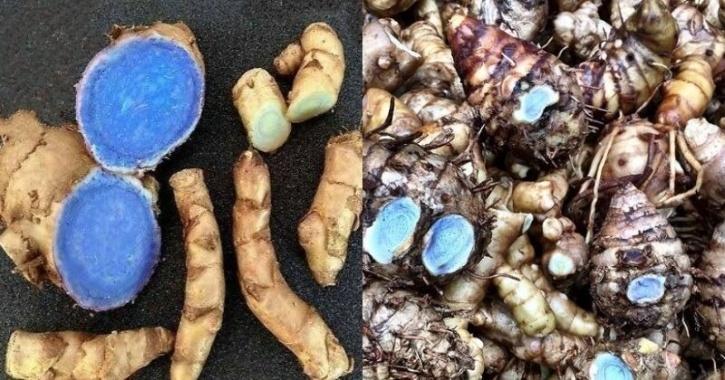 Black Turmeric (Curcuma caesia): Did You Know Yellow Haldi Has A Blackish Blue Cousin