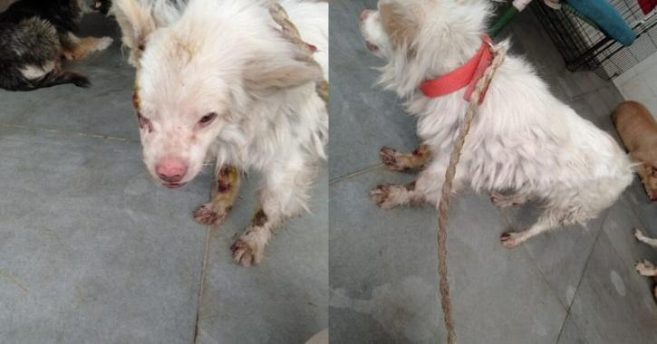 Man In Delhi Ties Dog To Two-Wheeler & Drags It
