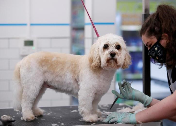 A group of scientists said domesticated animals can become infected with the virus and pass it to humans, including new variants that evolve in the pet