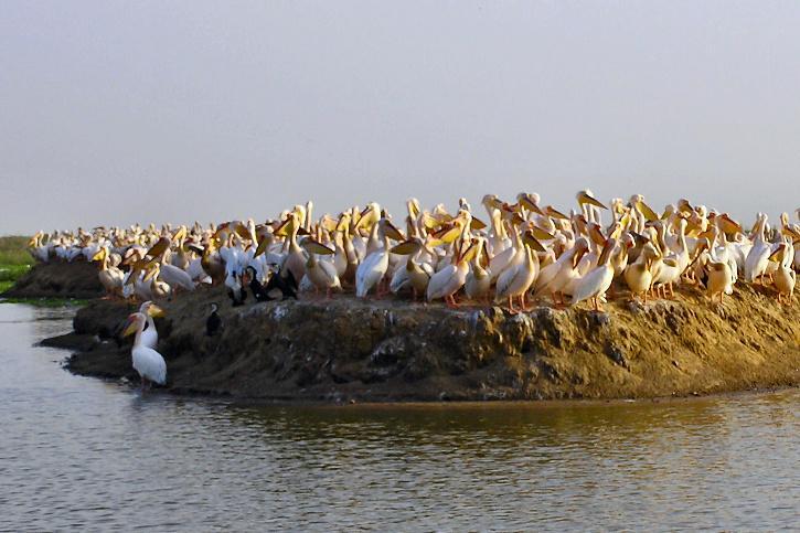 Djoudj National Bird Park