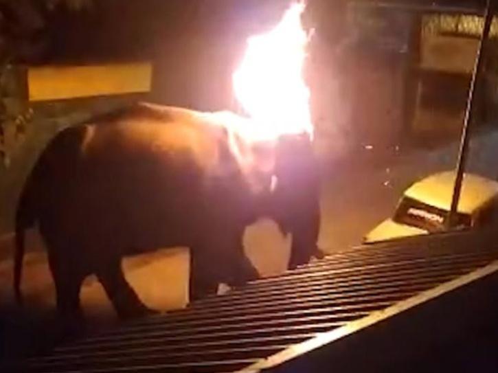 Tamil Nadu Elephant Death