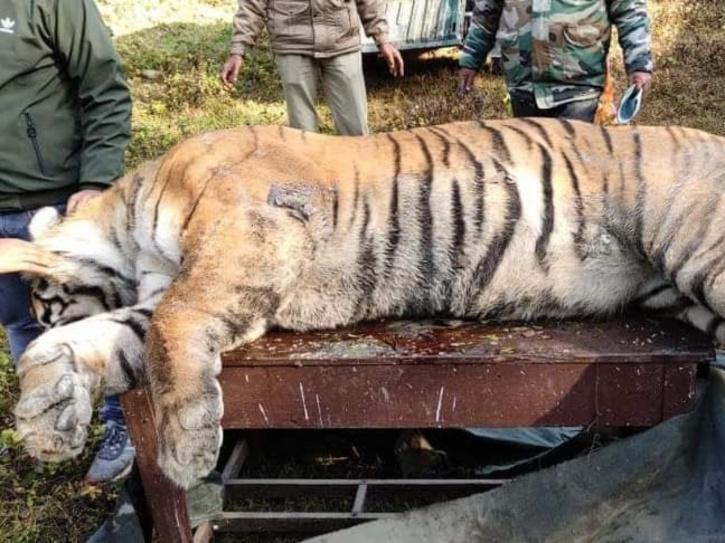 Tiger Death