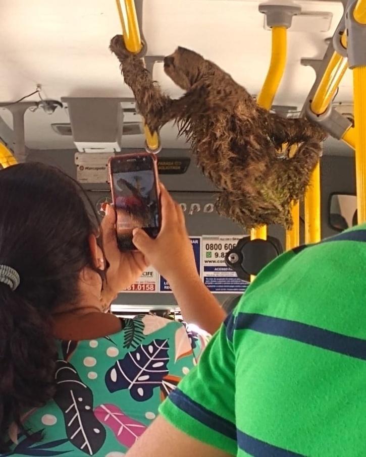 sloth on bus