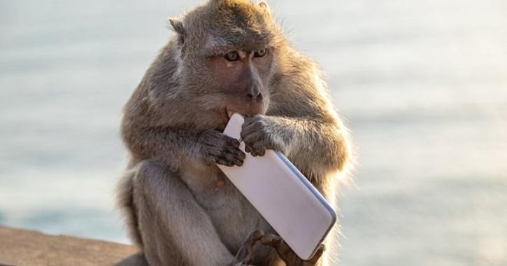 indonesia monkey thief