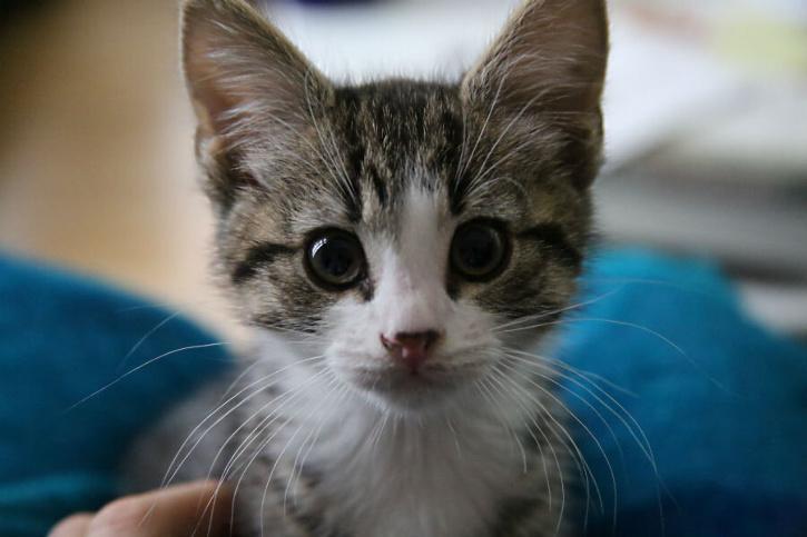 Kitten Burnt Alive