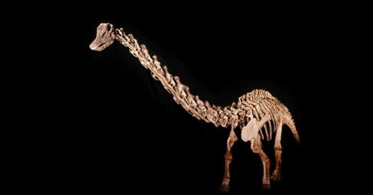 Titanosaur sauropod bones discovered