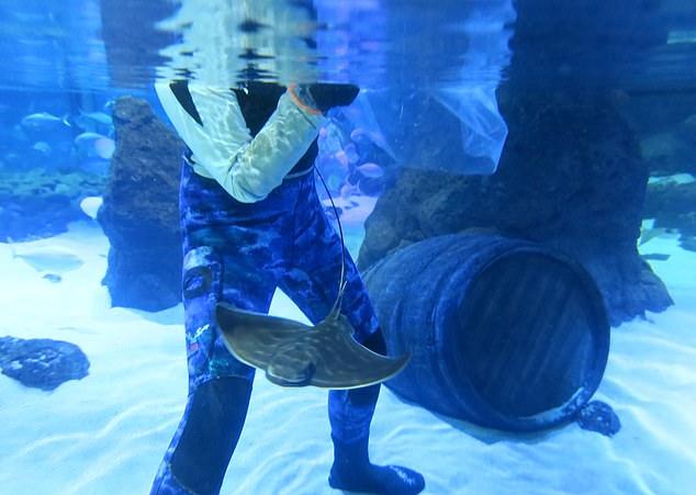 Sea Life Kelly Tarlton