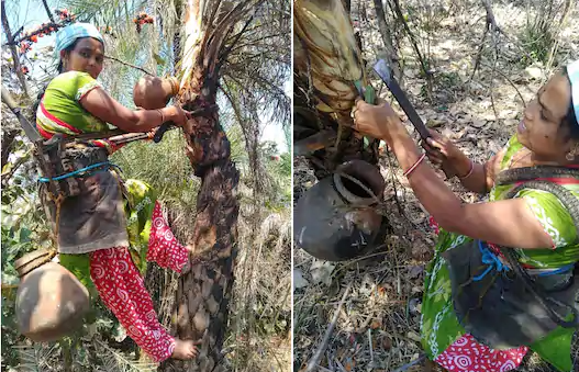 Ever since the death of her husband in 2016, 33-year-old Savitri works as a toddy tapper