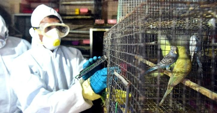 bird-flu-5ff42304f2edc