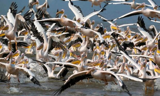 birds-dead-60127fe10d21b