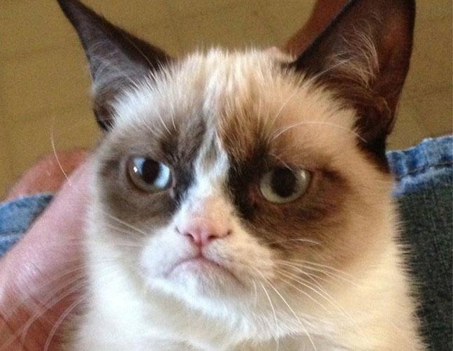 Grumpy Cat - Tardar Sauce