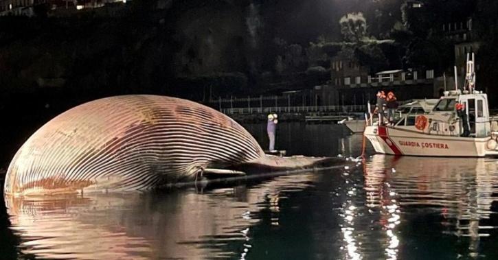 dead-whale-6009287b43052