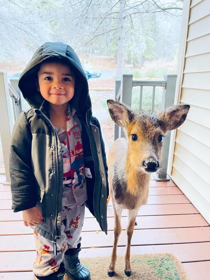 boy befriends deer