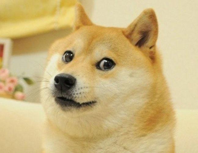 Doge - Kabosu