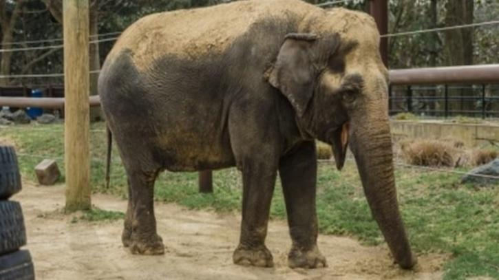 The Jharkhand government has decided to dispatch the animal to the Elephant Conservation