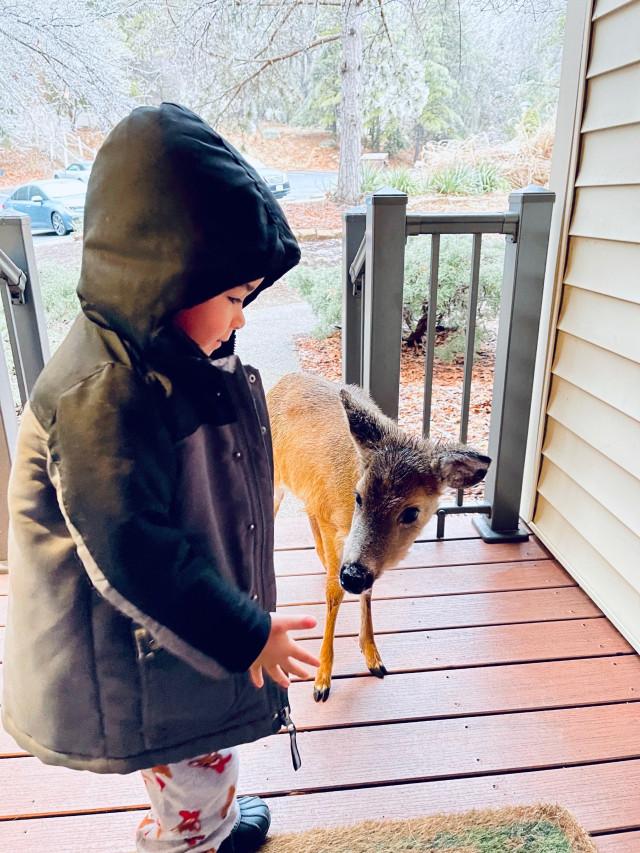 Virginia: Little Boy Befriends Baby Deer In Woods