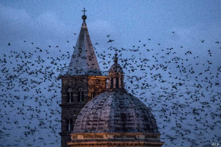 rome-birds-5ff01052168b1