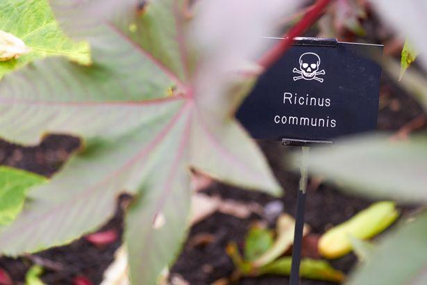 Alnwick Poison Garden
