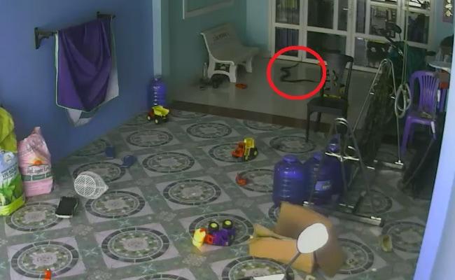 King Cobra tries to follow toddler inside