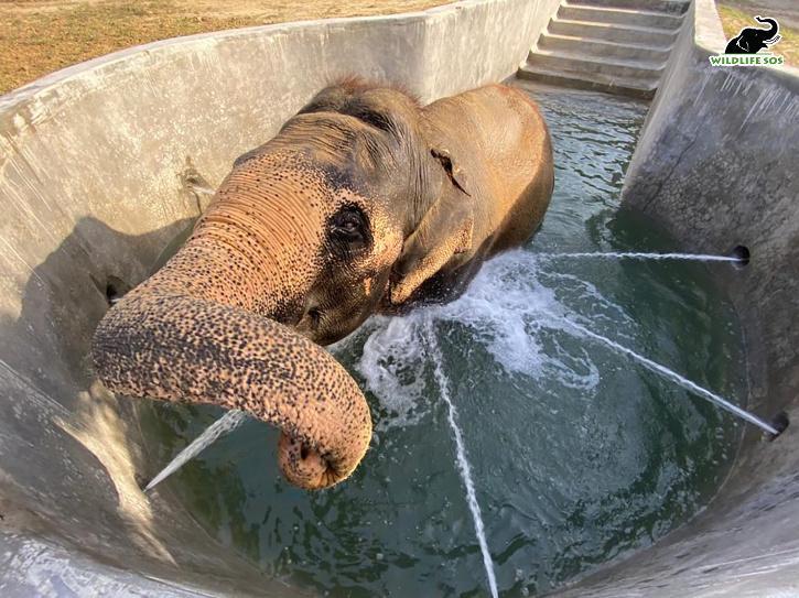 Elephant Wildlife SOS