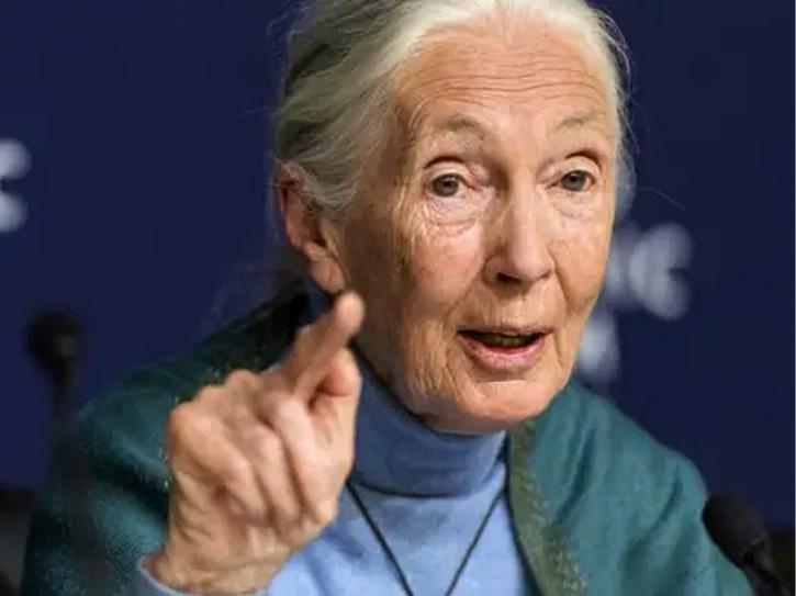 Jane Goodall covid-19
