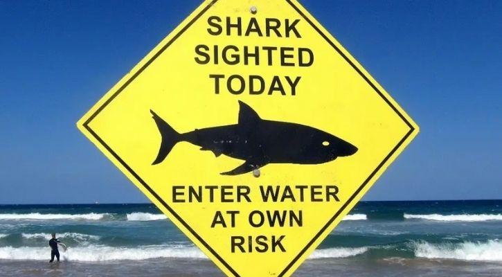 walking sharks