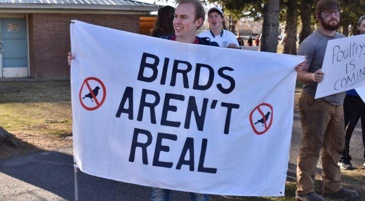 birds aren