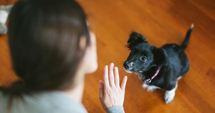 dogs human deceit