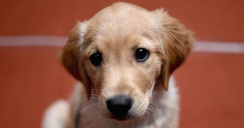 Pups Know When Humans Are Lying And Trust Own Instinct, Shows Study