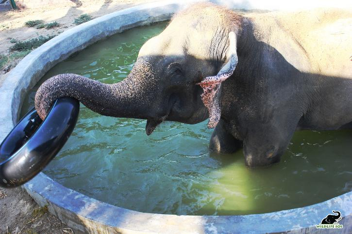 Elephants Wildlife SOS