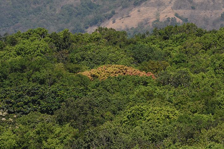 Semievergreen Forest Amboli