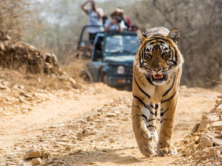 bandhavgarh-national-park-610267b746ebd