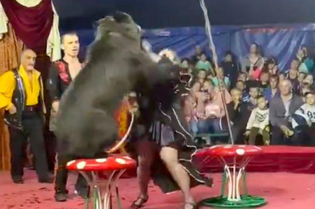 bear attacks circus trainer