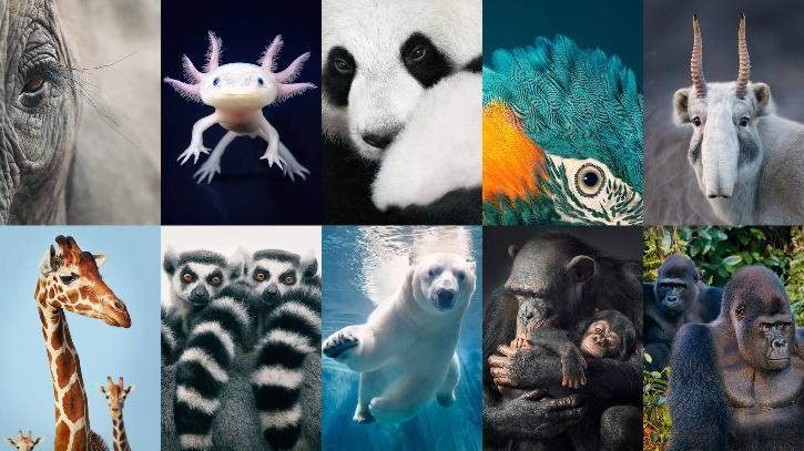 animals extinction